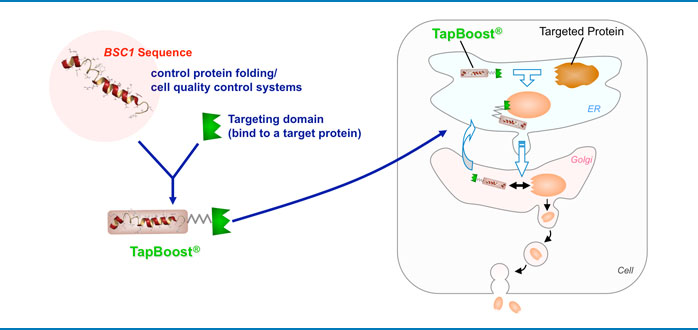 TapBoost_cell